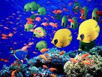 Scuba-Diving-Red-Sea-Egypt