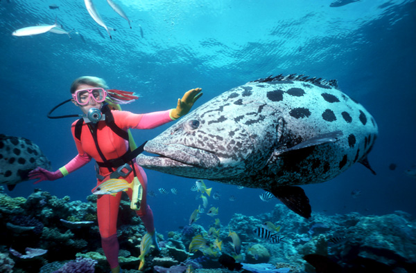 Great-Barrier-Reef-Australia-600x400