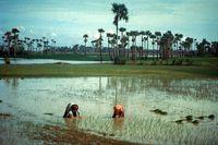 Cambodiaricefarming