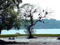Goa_Chapora_River_Colony_of_Birds