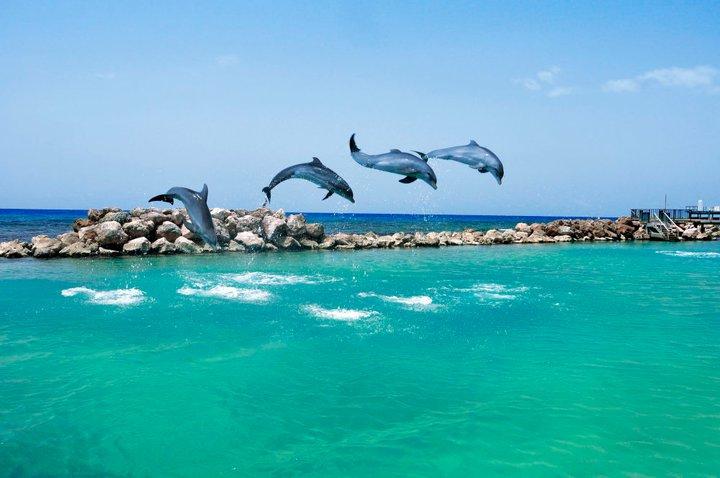 Dolphin-Cove-Jamaica